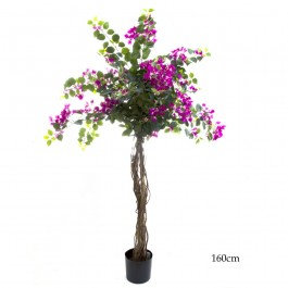 1.6mt Bouganvillea Tree - TCBOU1782FB