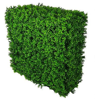 Buxus Hedge (Dark) 75cm x75cm x25cm