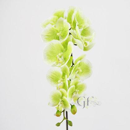 105cm Latex Phal Orchid Sprayx10 GF20066 Green