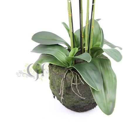 90cm Ruptured Orchid GF60421 - White