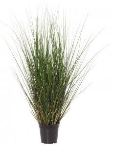 Coastal Grass 80cm