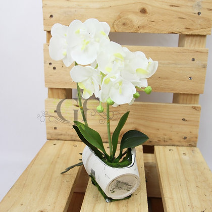 30cm Reveal Potted Orchid GF60322 - White