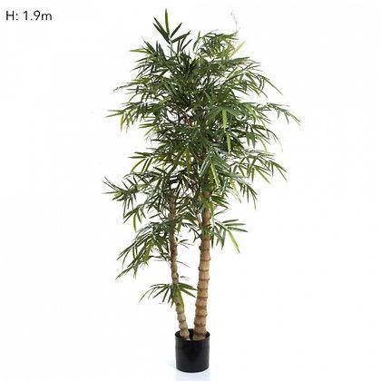 Royal Bamboo 1.9mts 1840 Leaves