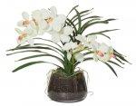 Vanda Orchid 35x55x40 76.9307.00WH