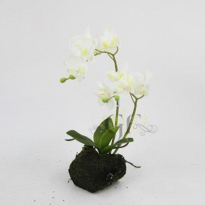35cm Ruptured Orchid GF60321 - White