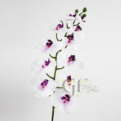 105 Phalaenopsis Orchid GF60388 - White