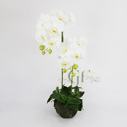 75cm Rugged Soil Orchid GF60318 - White