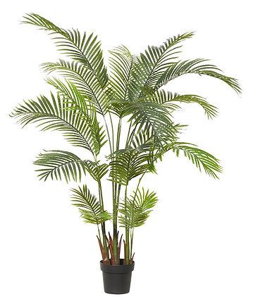 Areca Palm 110x110x170cm