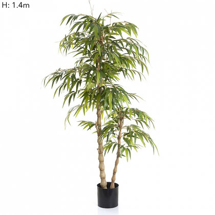 Bamboo Buddha Tree with 960 Leaves  1.4mts