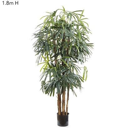 1.8mt Rhaphis Palm Tree Thin Leaf DBRP5789
