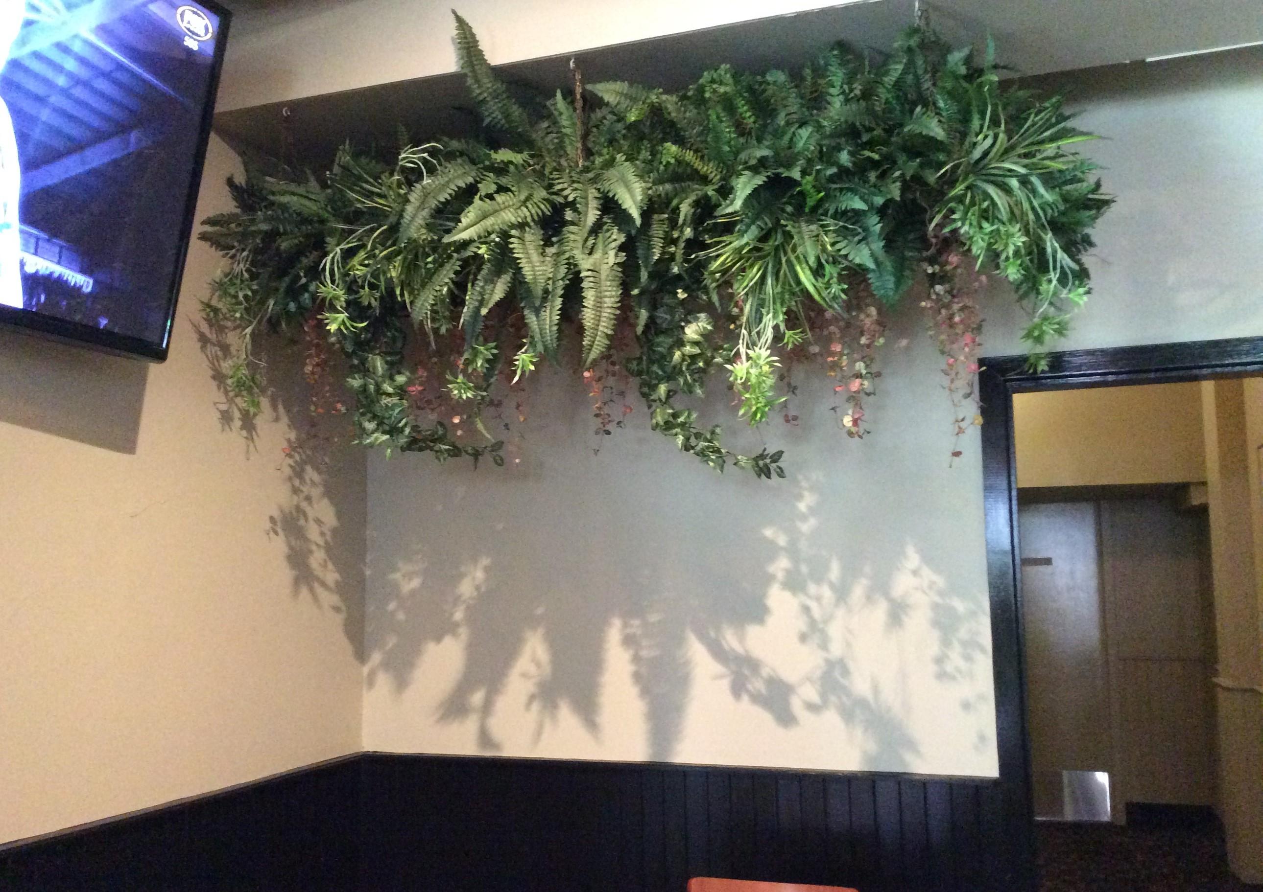 Hanging Wall Plants