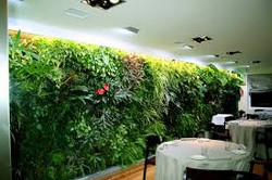 Lush Foliage Wall in Office
