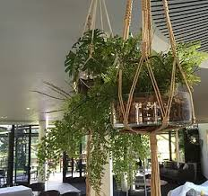 Hanging baskets | Hire or Buy