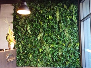 Lush Vertical Wall with exotic plant