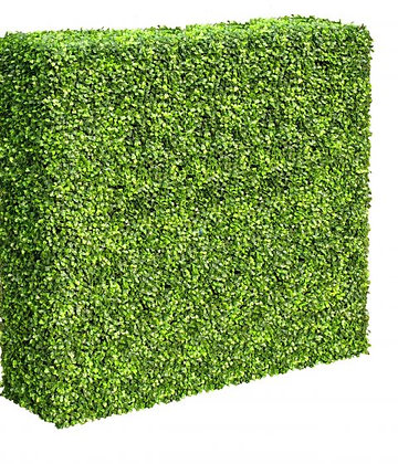 Boxwood Hedge Mixed 100Wx100Hx30D