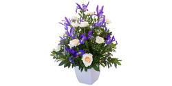 Iris & Rose Tribute