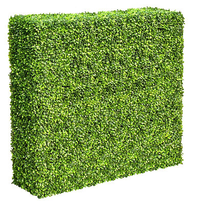 Deluxe  Buxus Hedge 150W x 150H x 30D