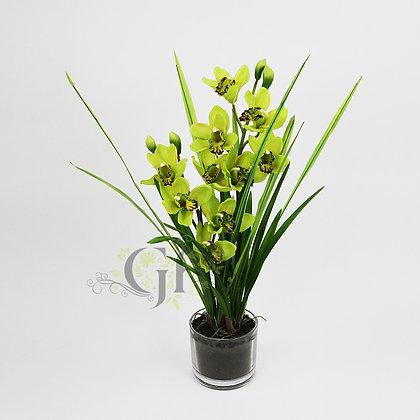 60cm Cymbidium Orchid GF20081 - Apple Green
