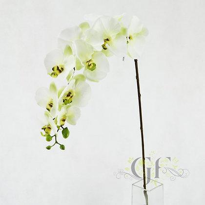 105cm Latex Phal Orchid Sprayx10 GF20066 App Grn