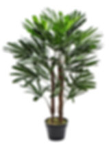 SF Rhaphis Palm 70x70x100 32.686.12.jpg