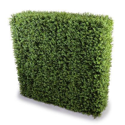 Buxus Hedge 100W x 100H x 30D