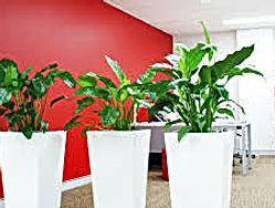 office plants 20.jpg