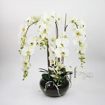 70cm Phalaenopsis Orchid GF20075 - Apple Green