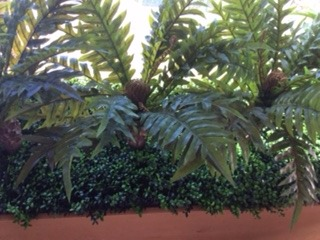 Cycad Garden Trough