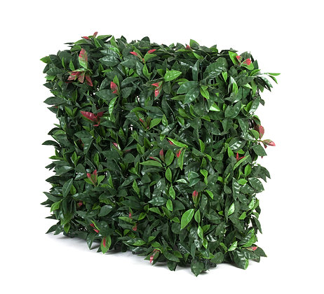 Photinia Hedge UV Stabilised 75Hx75Wx25D