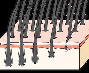 頭髮 2 - 5 年生長週期