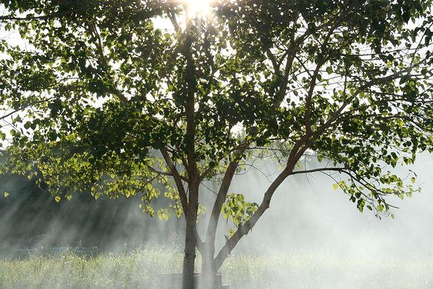 sunlight rays shing through the tree