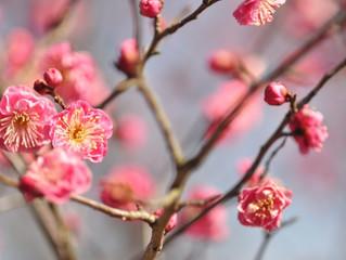 第11話 季節によって変わる花粉症薬
