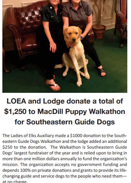 McDill Puppy Walkathon.PNG