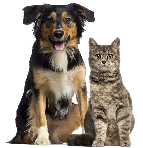 dog_and_cat_png_by_dalidas_art_db0lgx1-fullview.png