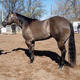 HorsesForSale