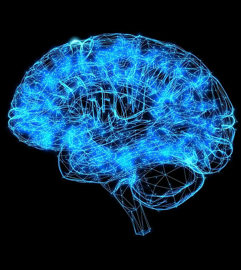 1135031-human-brain-illustration.jpg