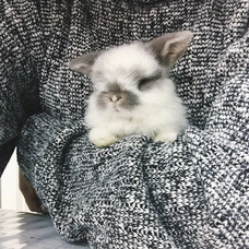 Ugly things u probably didnt know about Rabbits