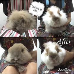 Xtra Long Coat rabbits