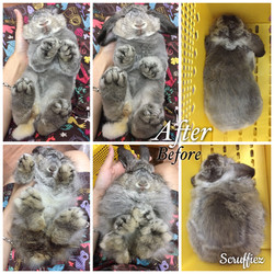 Fuzzy Lop Grooming