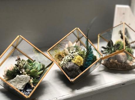 succulents6.jpg
