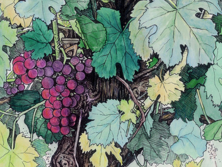 Stressed Vines