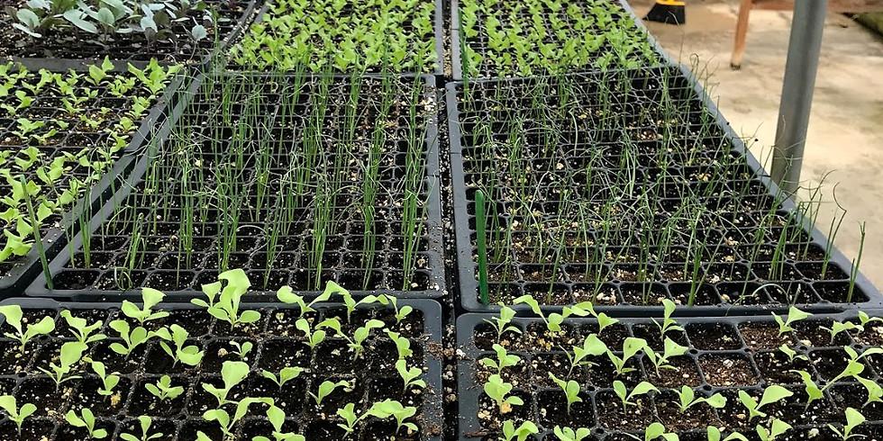 City Green's Annual Plant Sale