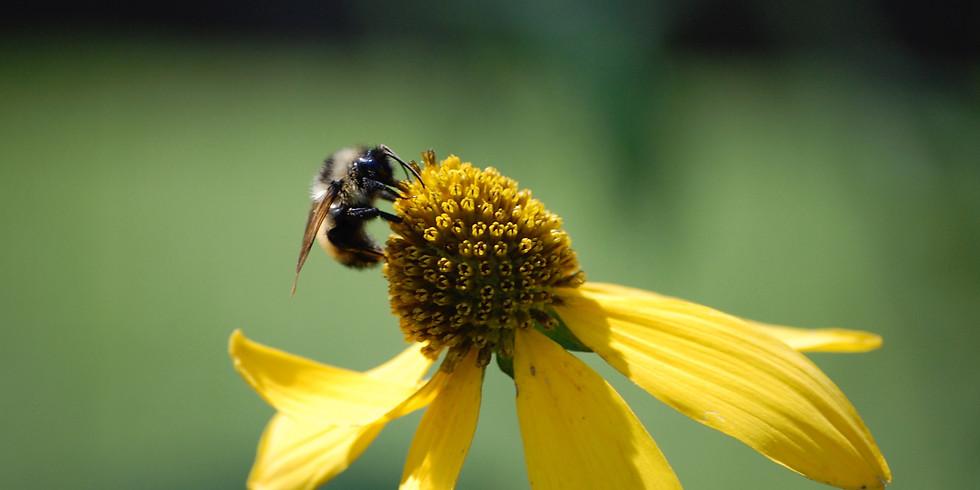 Backyard Beekeeping Workshop