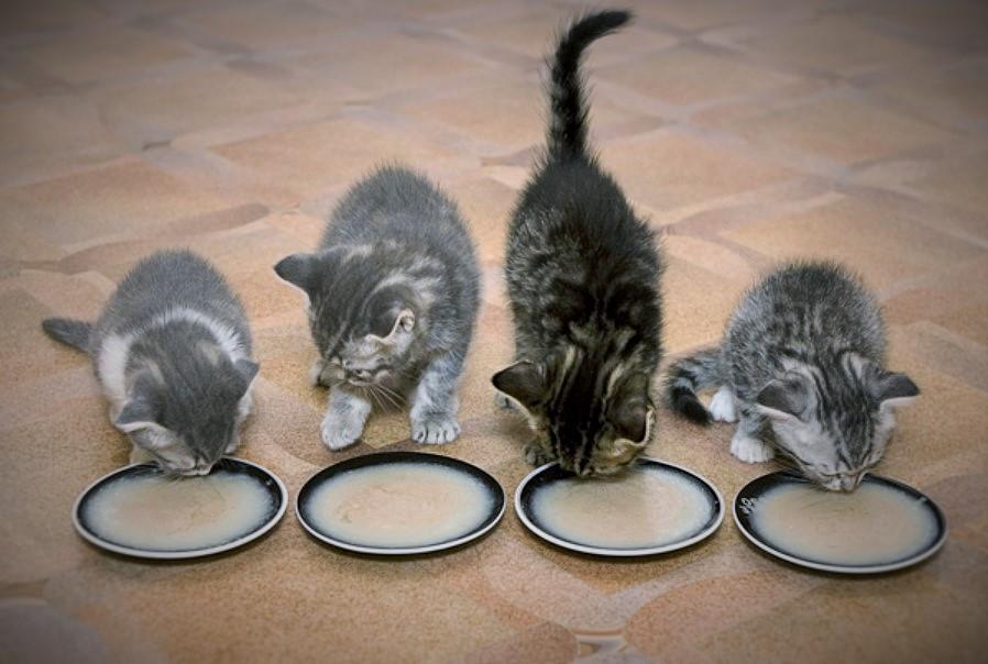 MTW_kittens