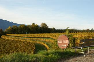 Strolling through wineries - Maso Thaler