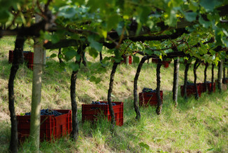 My favourite Santa Maddalena wine – Messnerhof