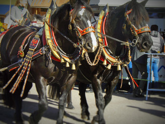 A horse parade in Ladin style