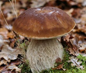 Seasons change, so do tastes - Wild mushrooms