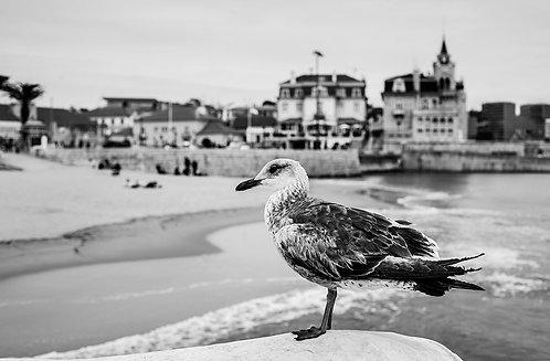O Pássaro