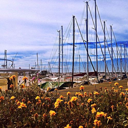 Pier Florido